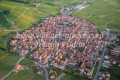 Dambach-la-Ville-1